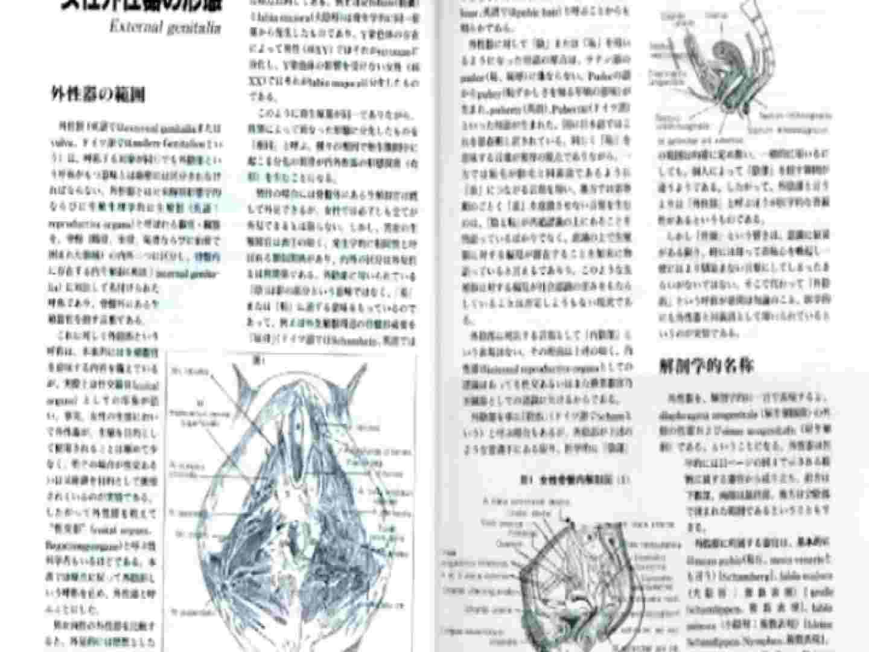 日本女性の外性器① 性器  84枚 10