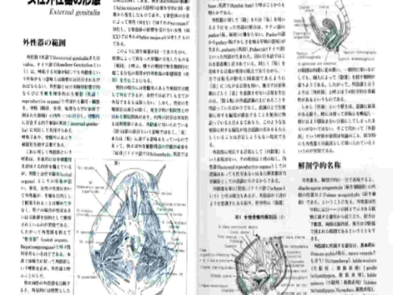 日本女性の外性器① 性器  84枚 18